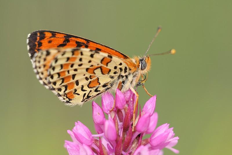Papillon gourmand IMG_8424